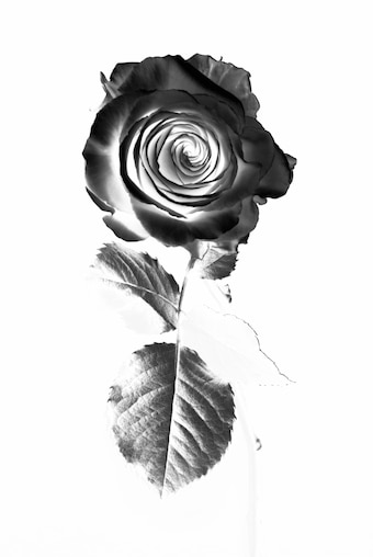 Floral Oud Rose 100ml