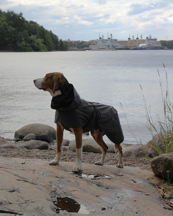 PAIKKA Dog Visibility Raincoat 2