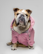 Max-Bone Talon Raincoat 1