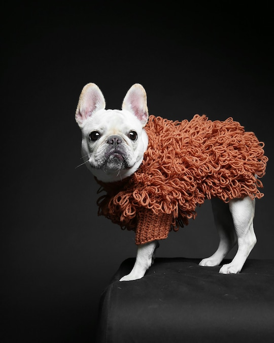Max-Bone Curly Knit Dog Sweater 1