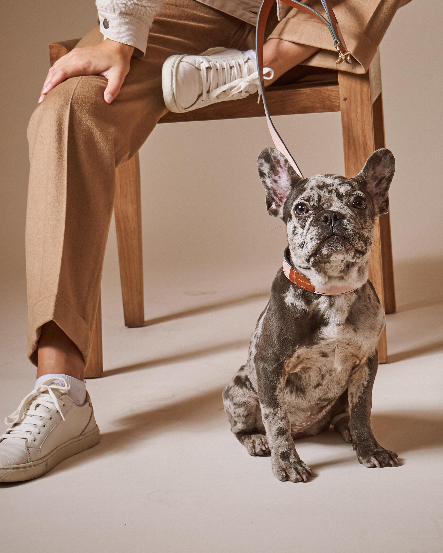 Max-Bone Stella Leash 1