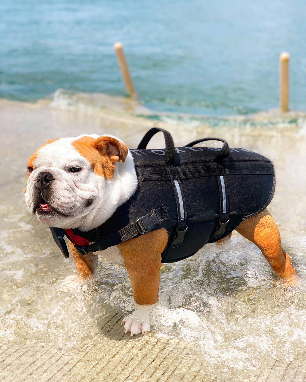 Max-Bone Sport Dog Life Jacket 1