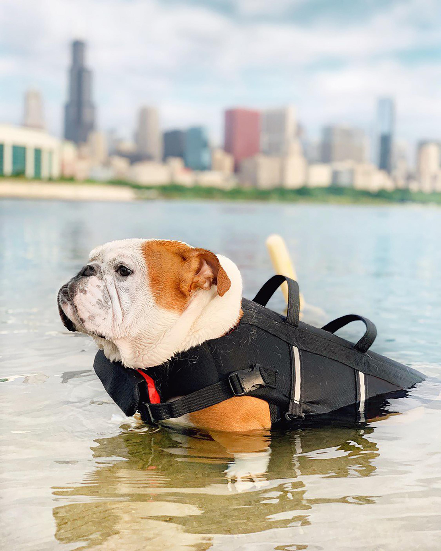 Max-Bone Sport Dog Life Jacket 2
