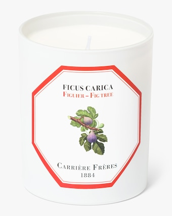 Carrière Frères Ficus Carica Fig Tree Candle 1