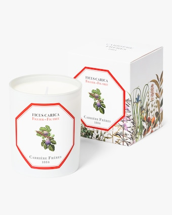 Carrière Frères Ficus Carica Fig Tree Candle 2