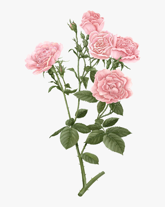 Carrière Frères Rosa Damascena Damask Rose Candle 2
