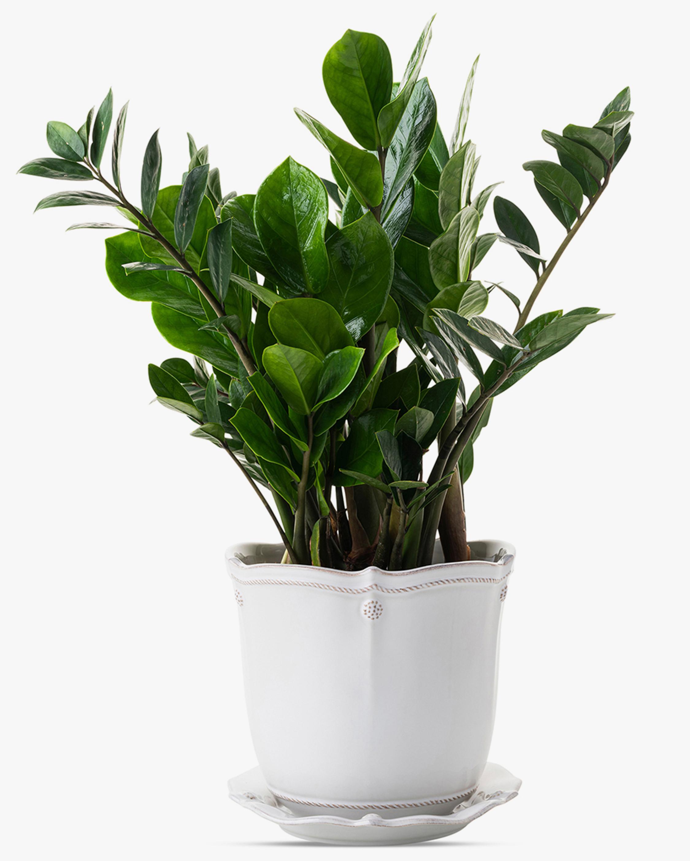 Juliska Berry & Thread Whitewash Planter & Saucer - 7in 1