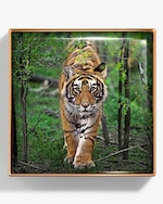 Chantecaille Tiger Luminescent Eye Shade 2